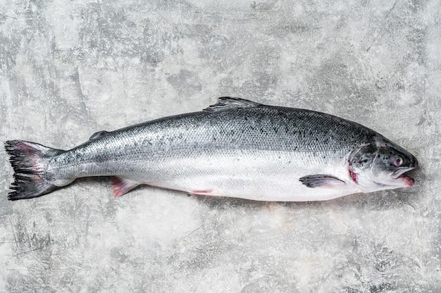 식탁에 신선한 생 연어 붉은 전체 생선. 회색 배경입니다. 평면도.