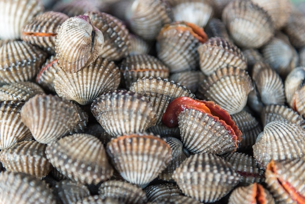 Fresh raw sea cockles clams display for sale at seafood market or thai street food
