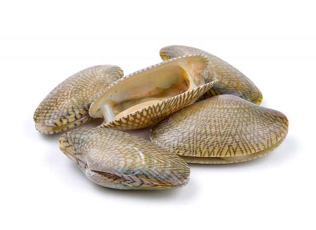 Fresh raw surf clam on a white surface