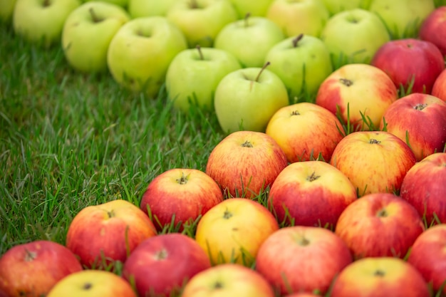 Свежие красные и зеленые яблоки на траве, концепция питания фруктов