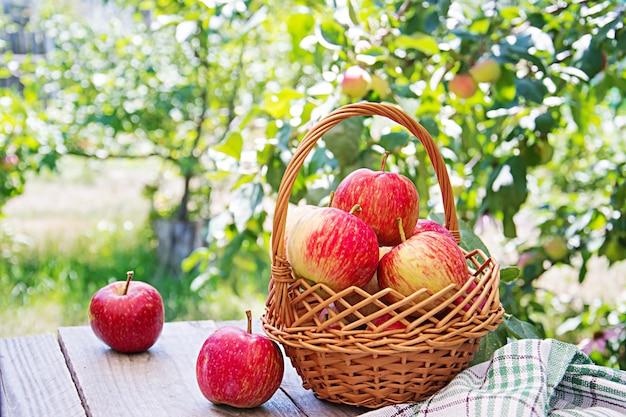 Свежие красные яблоки в корзине на столе в летнем саду