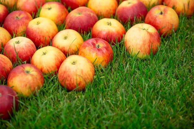 Свежие красные яблоки на траве, концепция питания фруктов