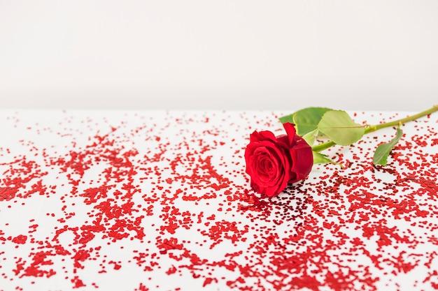 색종이 근처 신선한 붉은 꽃