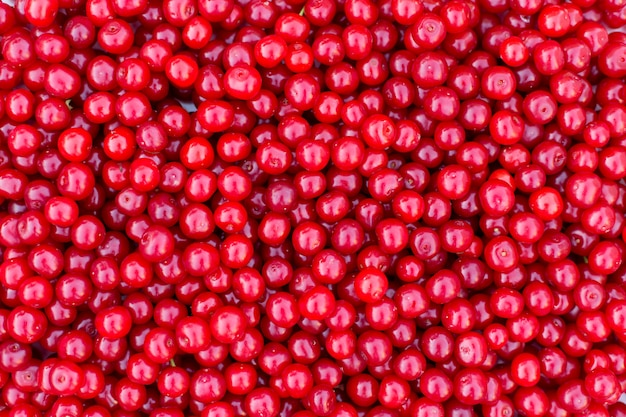 Fresh red cherries, summer fruits background texture.