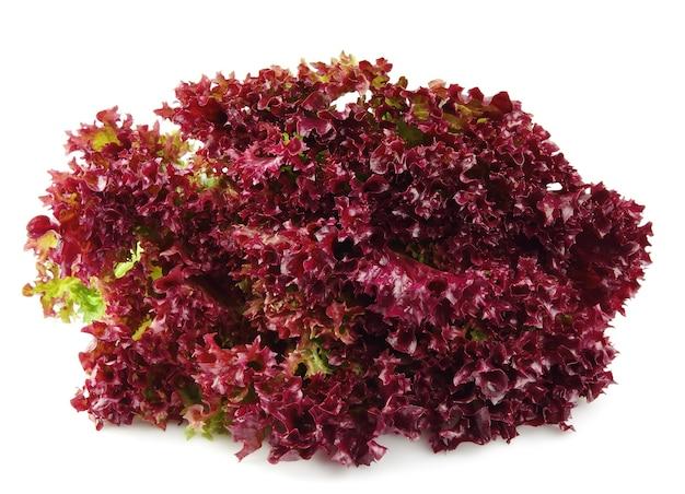 白地に新鮮な赤いレタス