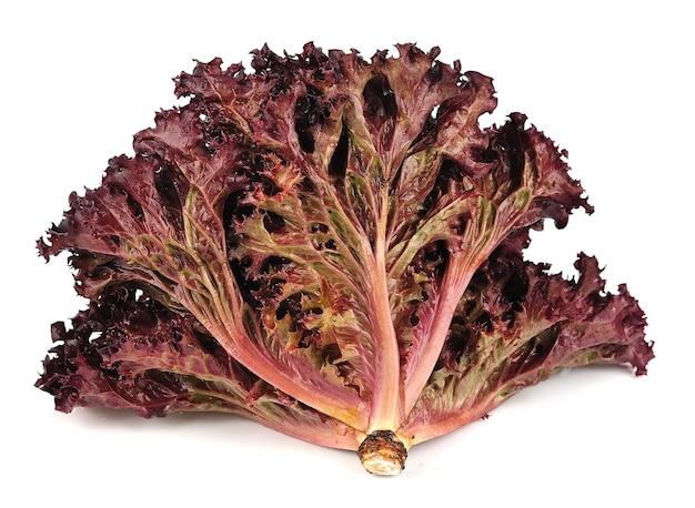 Салат из свежего красного салата на белом