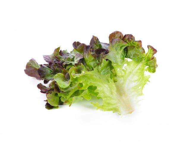 Fresh red oak lettuce isolated on white