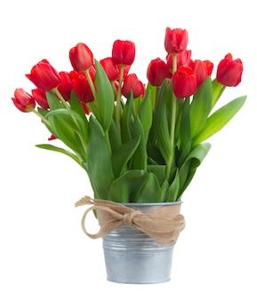 금속 양동이에 신선한 빨간 튤립 꽃