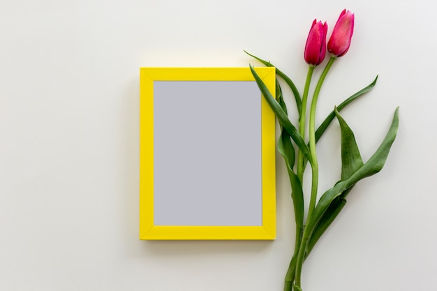 Fresh red tulip on white background with yellow blank frame