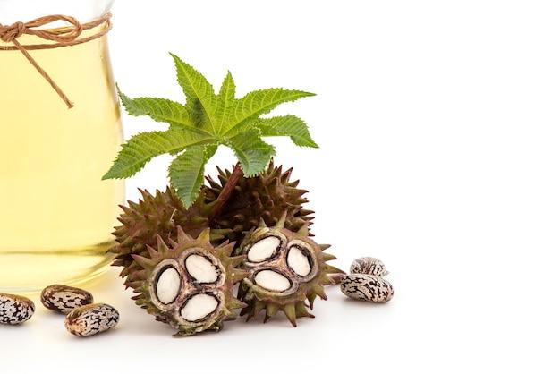 新鮮なトウゴマまたはヒマシ油、緑の葉、種子および油が白で分離されました。