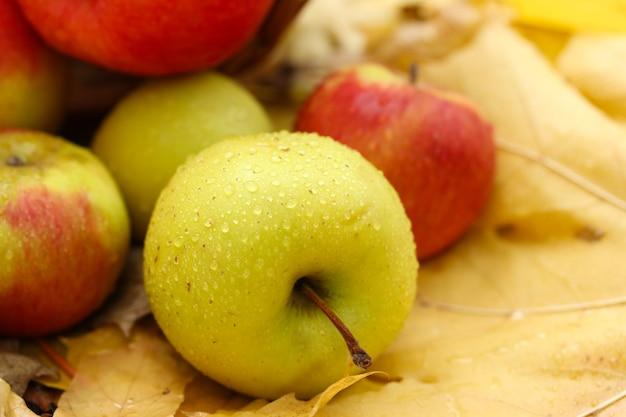 Fresh ripe apples in garden on autumn leaves