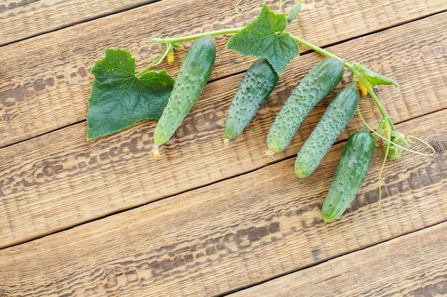 Свежие спелые огурцы с зелеными листьями, собранными в саду на старых деревянных досках. свежие спелые овощи. вид сверху.