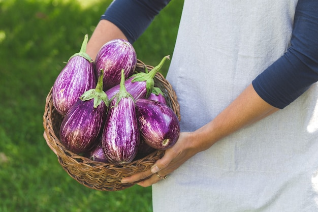 Fresh ripe eggplant in a basket