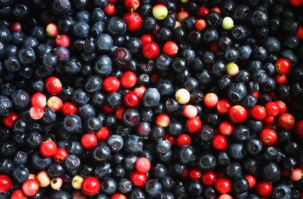 신선한 익은 숲 ranberries와 블루 베리 배경