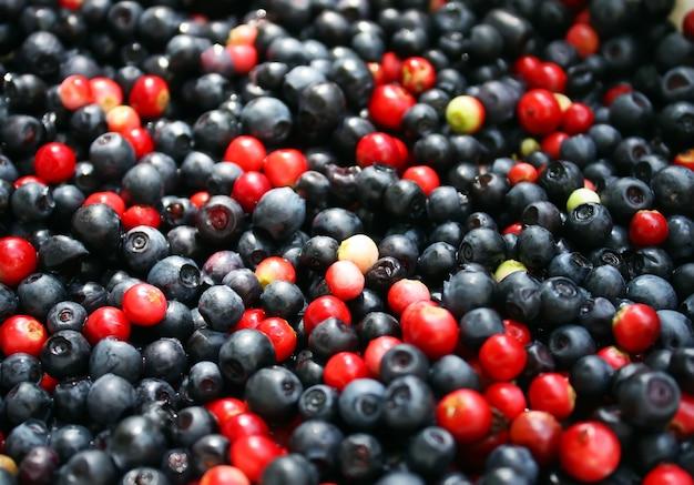 신선한 익은 숲 ranberries 및 블루 베리