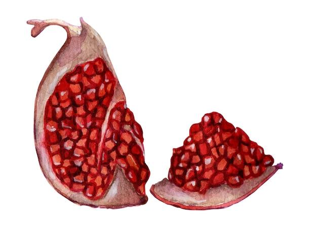新鮮な熟したザクロの四分の一と種でスライスzenras水彩のジューシーで甘いザクロ