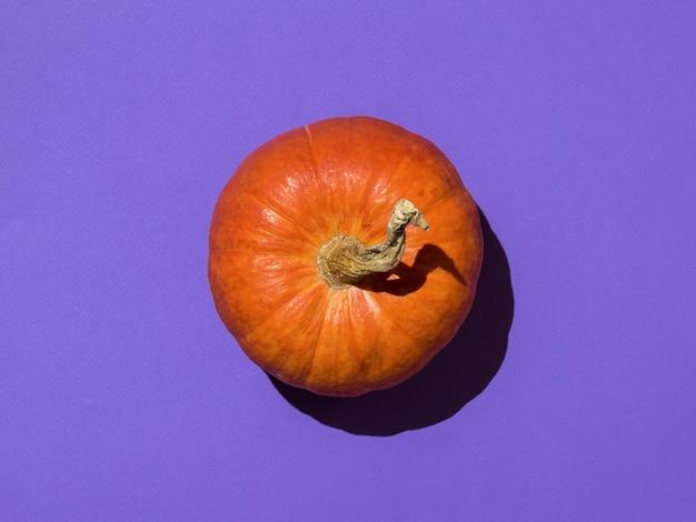 Свежая спелая тыква на ярко-фиолетовом фоне. вкусный и полезный овощ.
