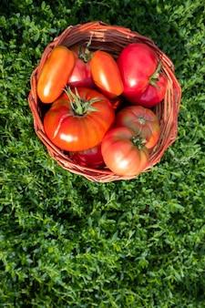 新鮮な完熟した赤いトマトは、緑の草の上のバスケットに入れられます。健康的な食事の概念。収穫