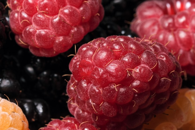 Fresh ripe sweet summer berries mix for dessert without sugar close-up macro photography