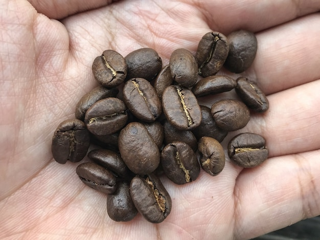 Fresh roasted coffee beans on human hand.