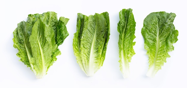 Свежий салат ромэн изолированные