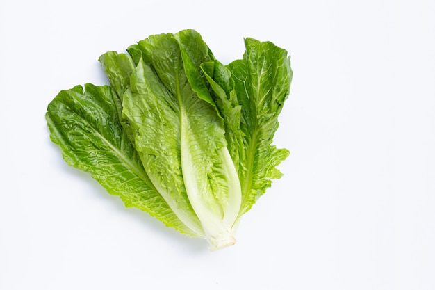 Fresh romaine lettuce on white.