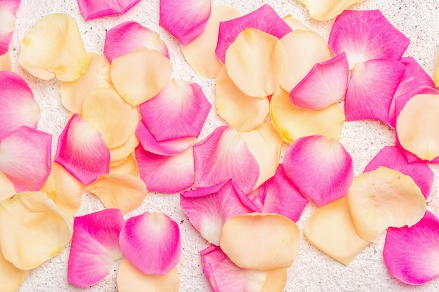 Fresh rose petals scattered on plaster background. multicolored flowers, festive or romantic concept. beauty or spa trend, gentle colors