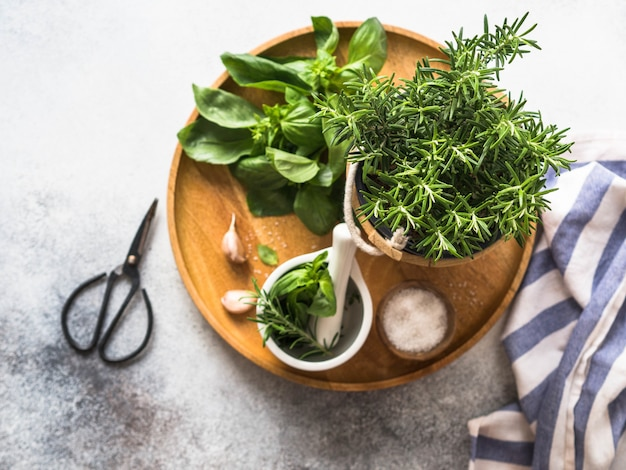 Fresh rosemary bush in wooden pots, twigs of fresh green basil, white mortar with pestle, salt and garlic on a round wooden tray on a gray background. top view.