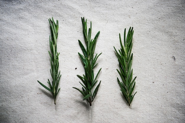 Fresh rosemary cooking seasoning