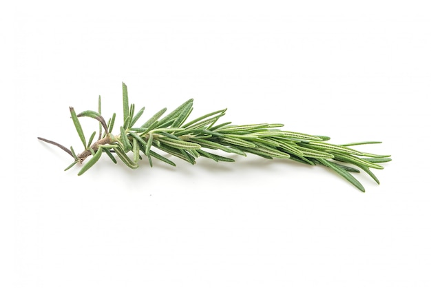 Fresh rosemary isolated