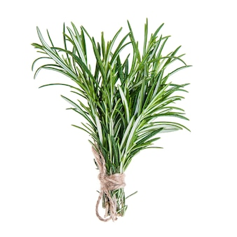 Fresh rosemary sprigs tied in bundle isolated on white
