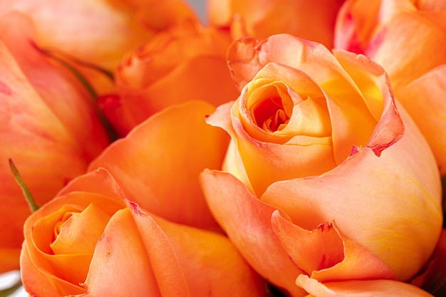 Fresh roses flowers. flowers background close up