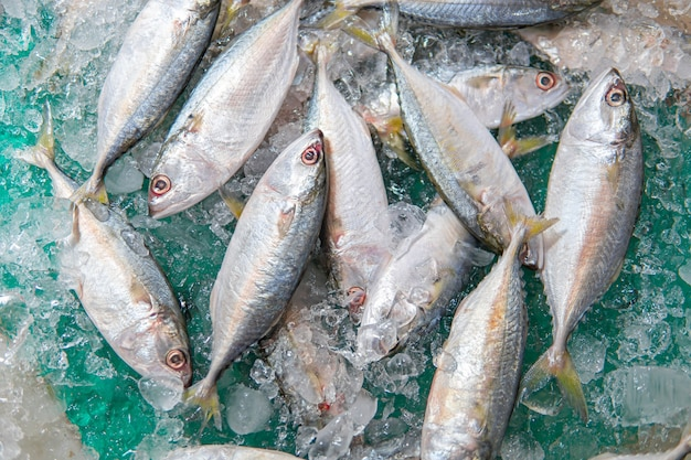 Fresh saba​ mackerel fish on ice in supermarket. top view of fresh mackerel or saba on ice for sale. market shelf - saba fish arrange in ice.