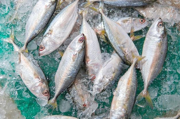 スーパーマーケットの氷の上で新鮮なサバのサバの魚。販売のための氷の上の新鮮なサバまたはサバの上面図。マーケットシェルフ-サバの魚は氷の中に配置されます。