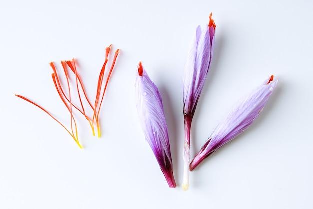 Свежий цветок шафрана и сушеные шафрановые нити на белом фоне