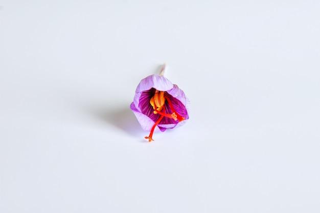 흰색 바탕에 신선한 사프란 꽃입니다.
