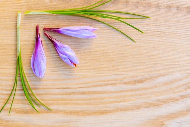 木の表面に新鮮なサフランの茎と花。スペースをコピーします。あなたのテキストのための場所。