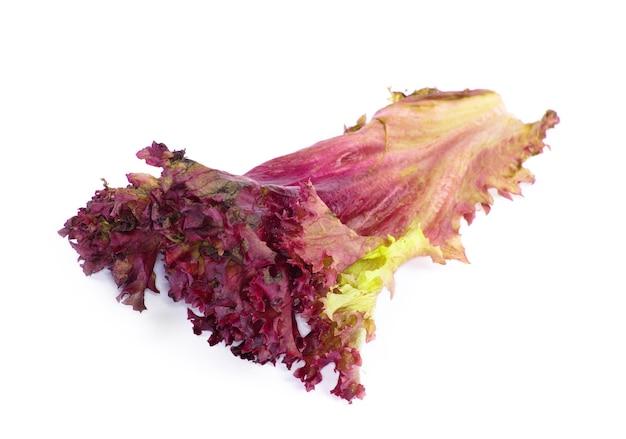 Свежий салат изолирован