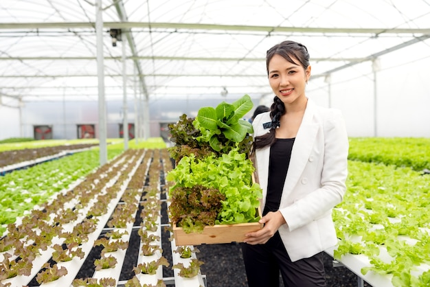 Fresh salad vegetables are harvested by asian women farmers in hydroponic plant system farms in the greenhouse and sold. fresh vegetable and healthy food concept.