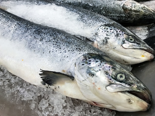 Fresh salmon fish on ice in market or store.