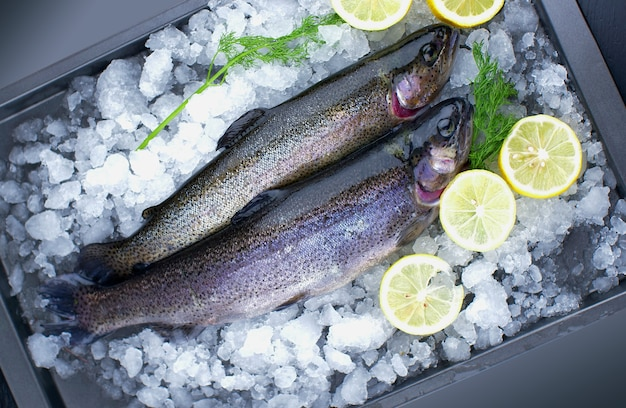 Fresh salmon trouts on ice with lemon slice