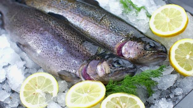 Свежая форель лосося на льду с долькой лимона