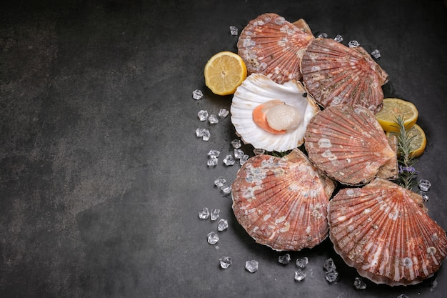Fresh scallops with space for writing on a black background