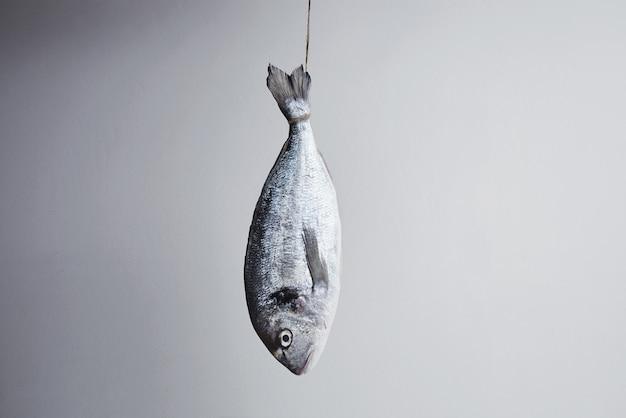 真ん中のロープに尾に吊るされた新鮮な鯛