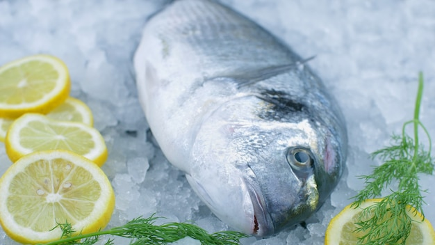 Fresh sea bream on ice with lemon slice