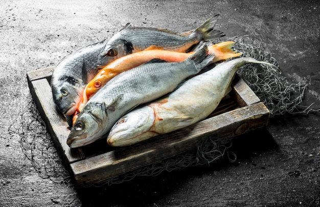 Fresh sea fish in the fishing net on tray on rustic table