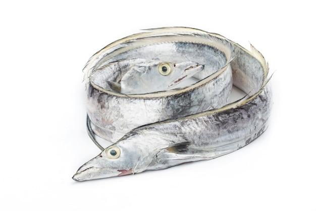 Pesce fresco: coda di capelli su sfondo bianco.