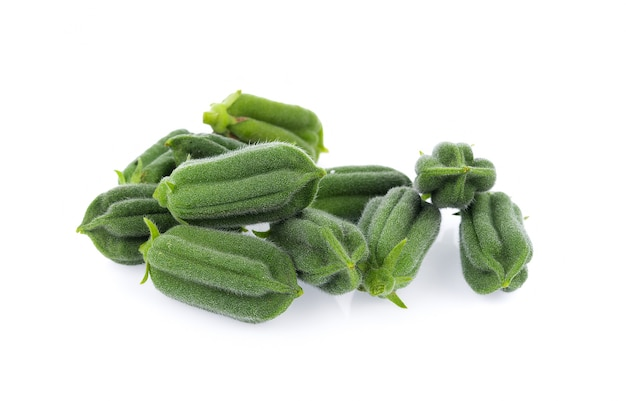 Fresh sesame pods isolated on white surface