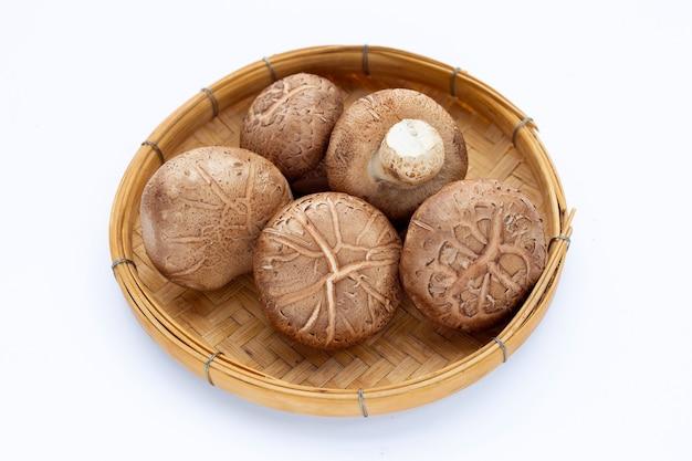 흰색 표면에 신선한 표고 버섯