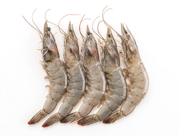 Fresh shrimp/prawn